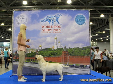 World Dog Show 2016 - I