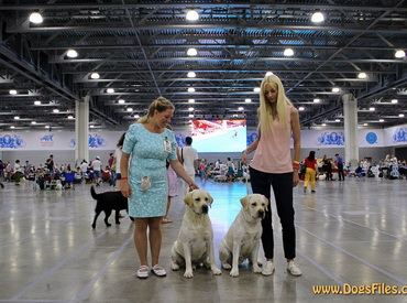 World Dog Show 2016 - II